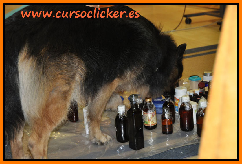 zoofarmacognosis madrid mary rodriguez y cursoclicker enero 2015 11